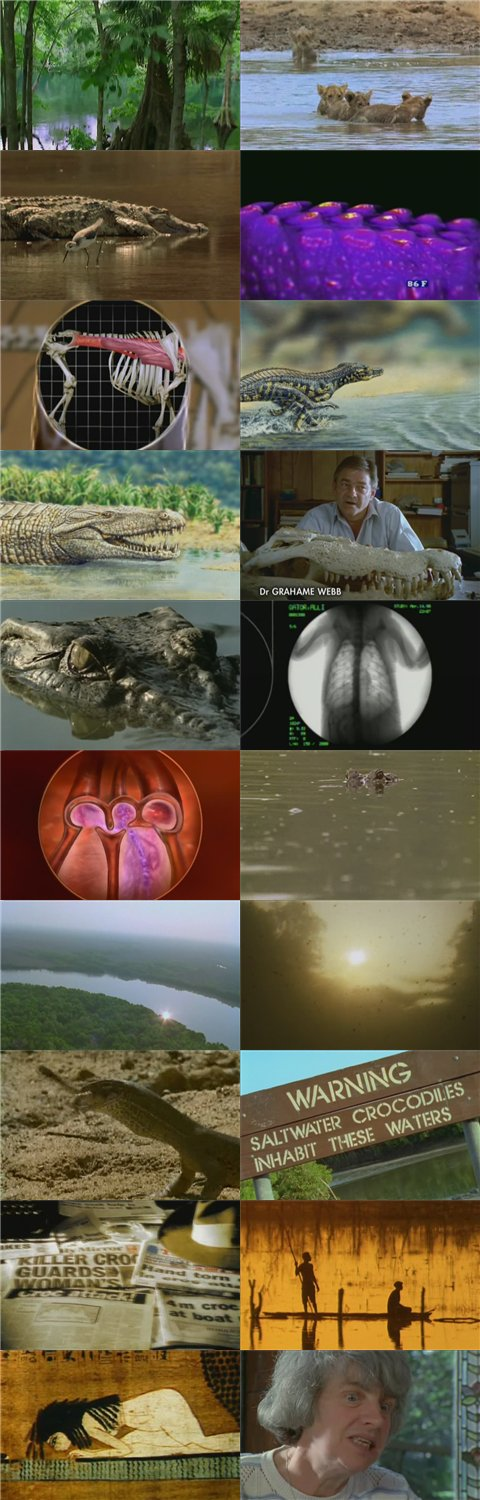 Image: Crocodiles-Screen0.jpg
