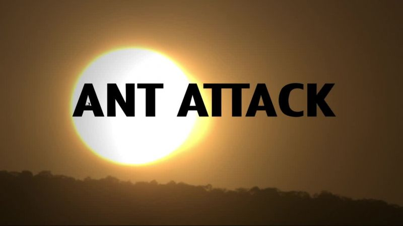 Image: Ant-Attack-BBC-Cover.jpg