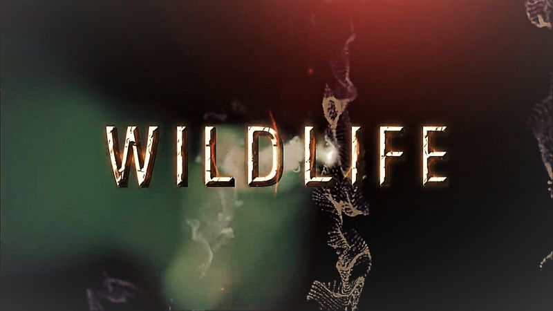 Image: Wildlife-Collection-1-Cover.jpg