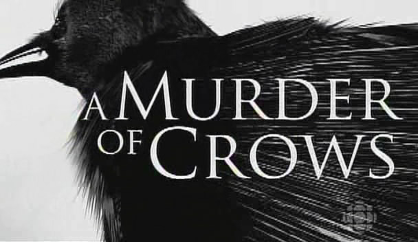 Image: A-Murder-of-Crows-Cover.jpg