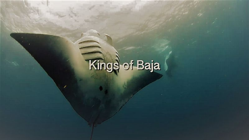 Image: Kings-of-Baja-Cover.jpg