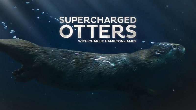 Image: Supercharged-Otters-Cover.jpg