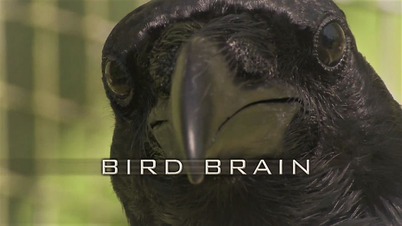 Image: Bird-Brain-Cover.jpg