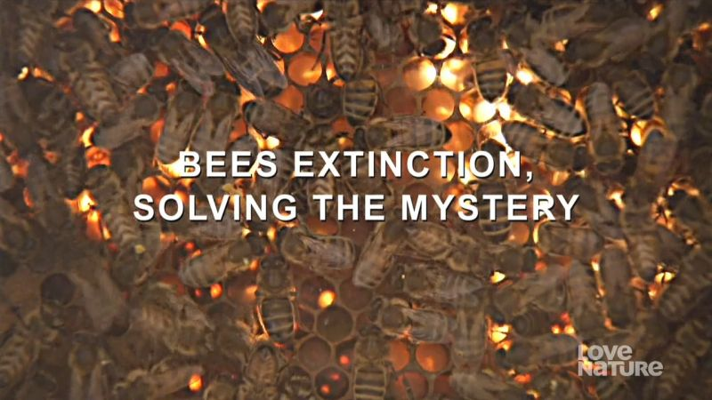 Image: Bees-Extinction-Solving-the-Mystery-Cover.jpg