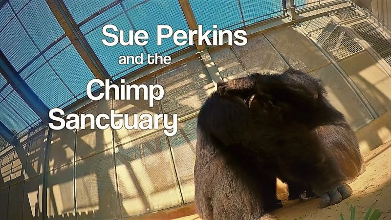 Image: Perkins-and-the-Chimp-Sanctuary-Cover.jpg