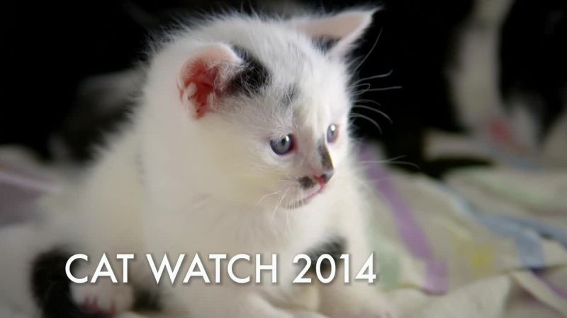 Image: Cat-Watch-BBC-Cover.jpg