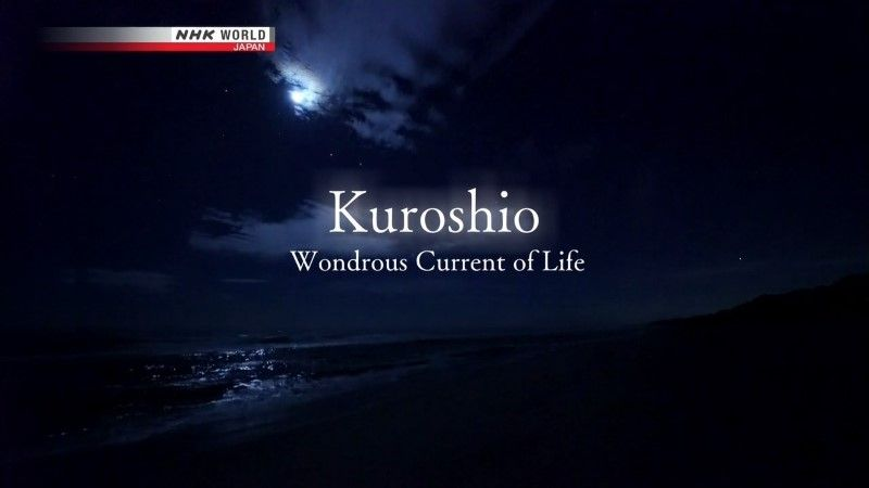 Image: Kuroshio-Wondrous-Current-of-Life-Cover.jpg