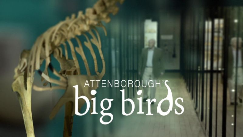 Image: Attenborough-s-Big-Birds-Cover.jpg