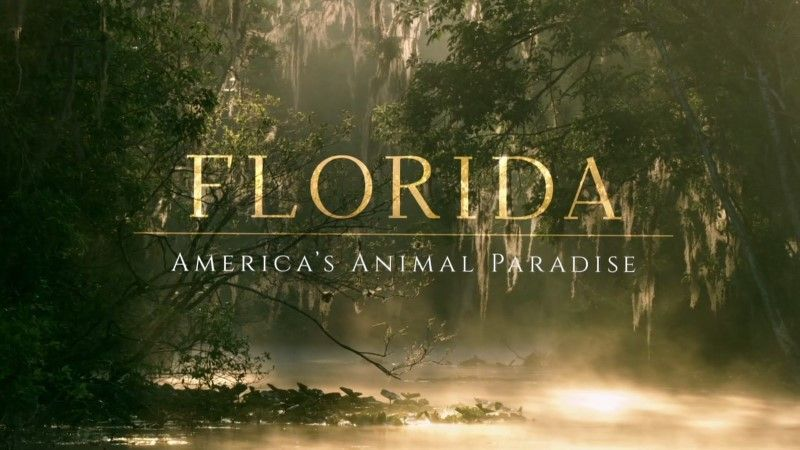 Image: Florida-America-s-Animal-Paradise-Cover.jpg