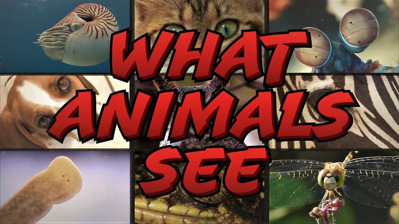 Image: What-Animals-See-Cover.jpg