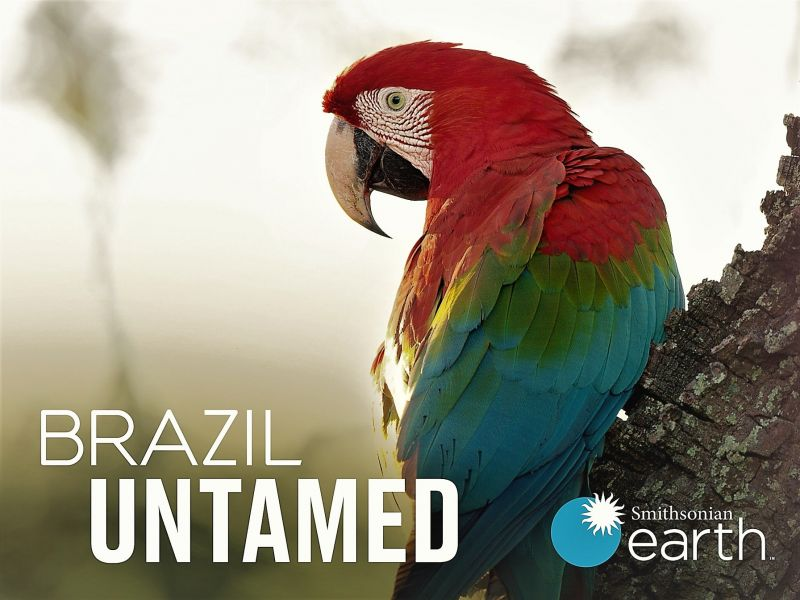 Image: Brazil-Untamed-Series-1-Cover.jpg