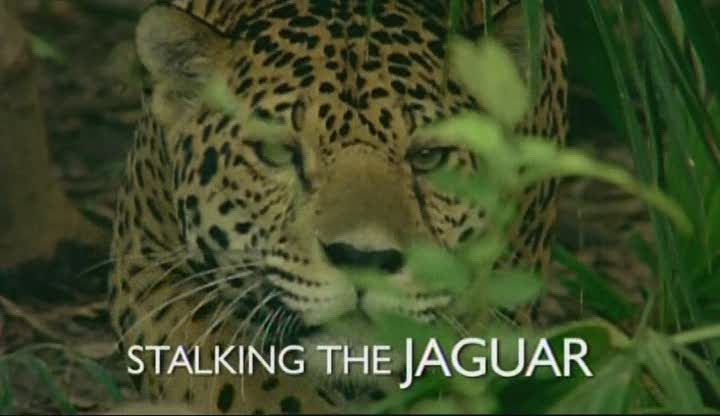 Image: Stalking-the-Jaguar-Cover.jpg
