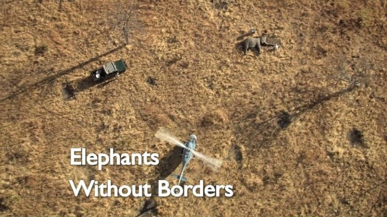 Download BBC Natural World 2009 Elephants Without Borders 1080p HDTV x265 AAC Forum mp4