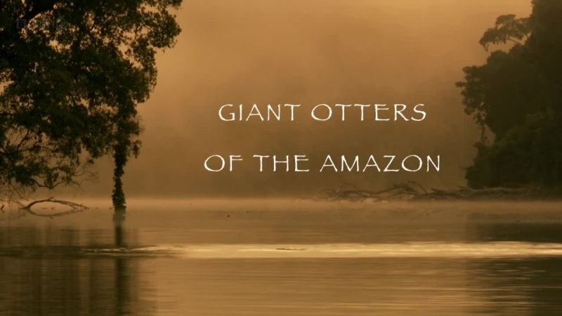 Image: Giant-Otters-of-the-Amazon-Cover.jpg