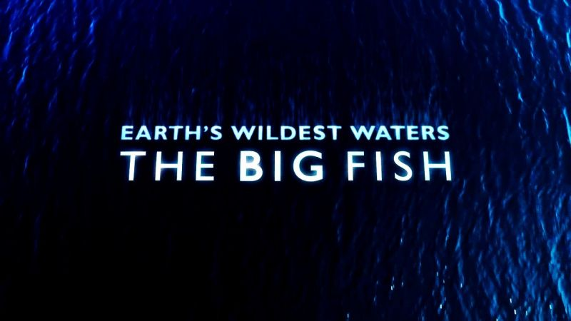Image: Earth-s-Wildest-Waters-The-Big-Fish-Cover.jpg
