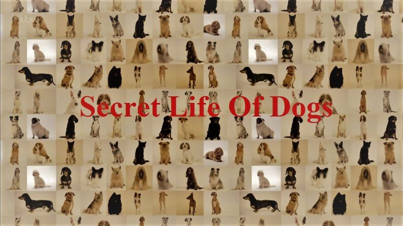 Image: Secret-Life-of-Dogs-Series-2-Cover.jpg