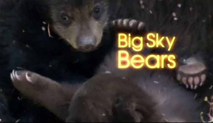 Image:Big-Sky-Bears-Cover.jpg