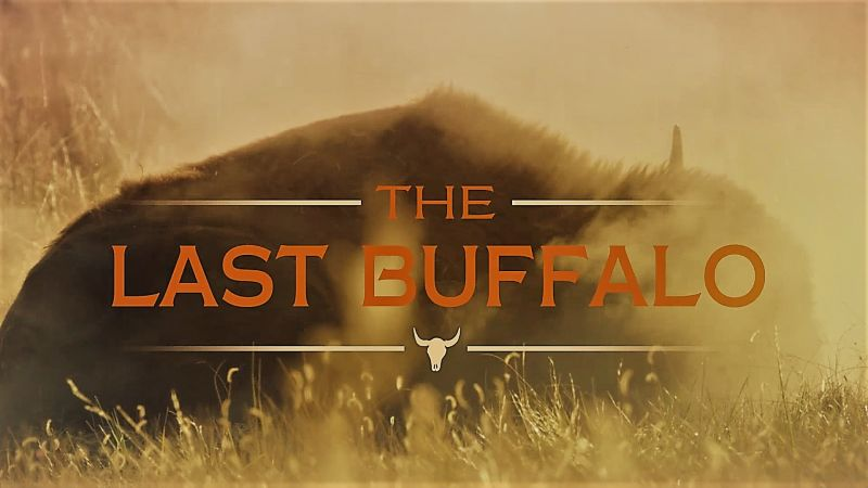 Image: The-Last-Buffalo-Cover.jpg