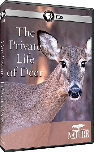 Image: The-Private-Life-of-Deer-Cover.jpg