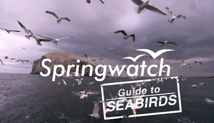 Image: Guide-to-Sea-Birds-Cover.jpg