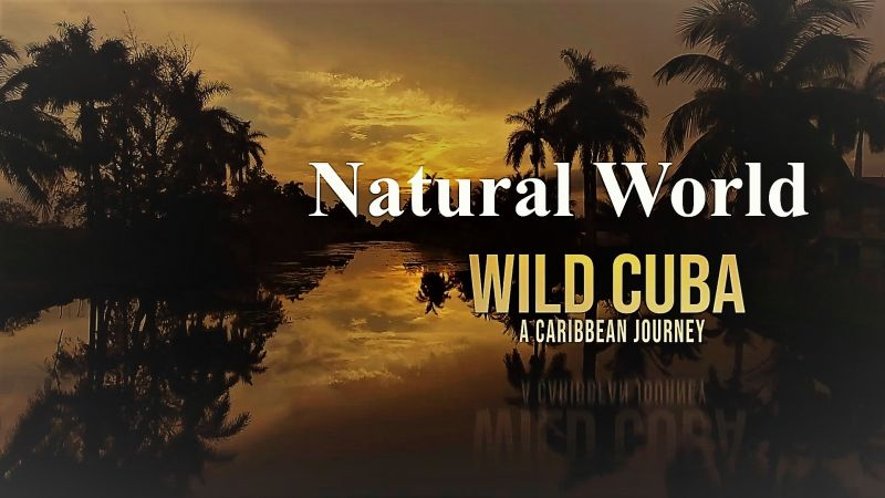 Image: Natural-World-Wild-Cuba-a-Caribbean-Journey-Part-1-Cover.jpg