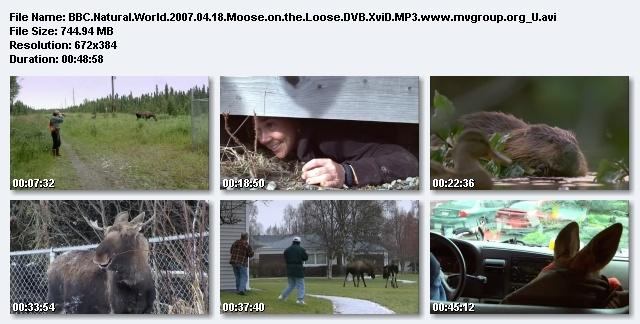 Image: Moose_on_the_Loose_Screen0.jpg
