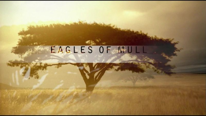 Image: Eagles-of-Mull-Cover.jpg