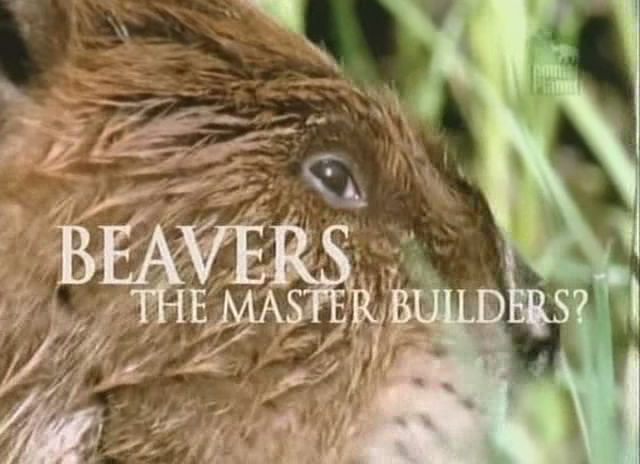 Image: Beavers-The-Master-Builders-Cover.jpg