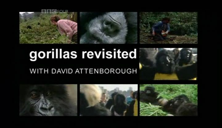 Image: Gorillas-Revisited-BBC-Cover.jpg
