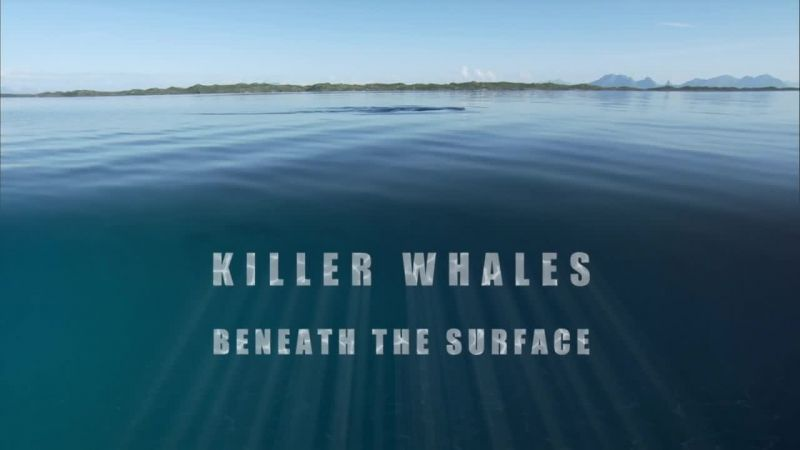 Image: Killer-Whales-Beneath-the-Surface-Cover.jpg