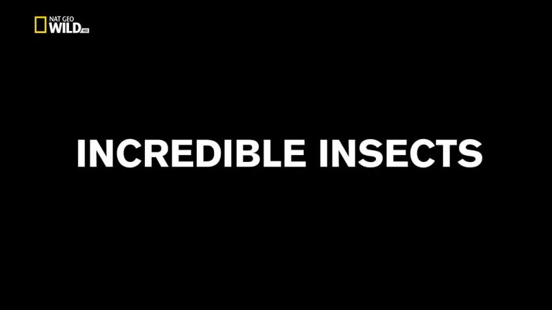 Image: Incredible-Insects-Cover.jpg