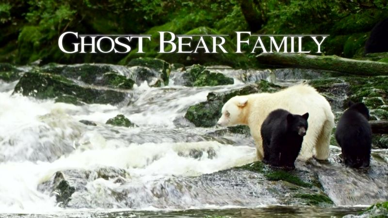 Image: Ghost-Bear-Family-Cover.jpg