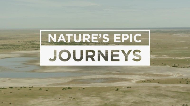 Image: Nature-s-Epic-Journeys-Cover.jpg