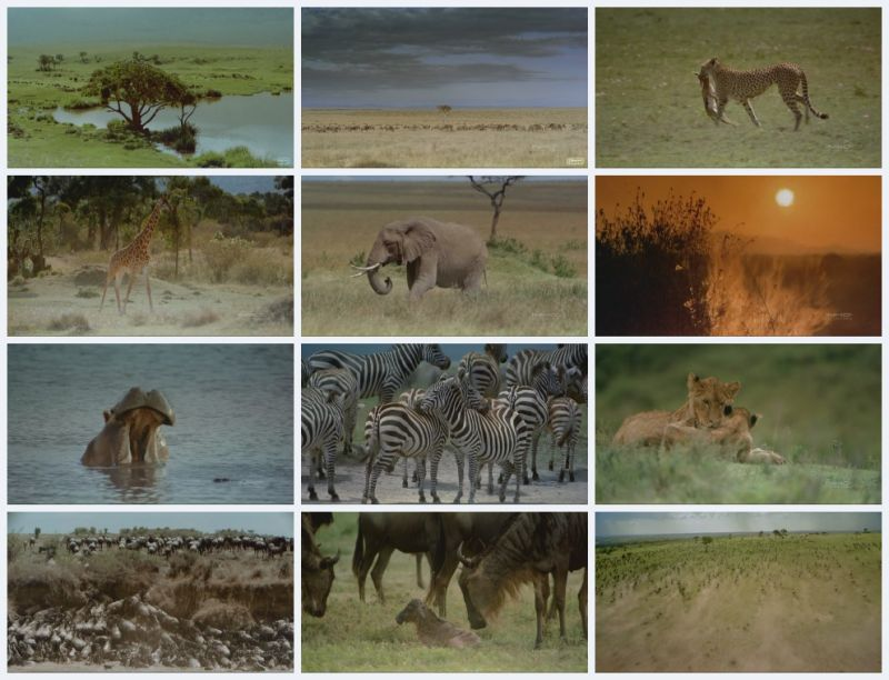 Image: Africa-The-Serengeti-Screen0.jpg