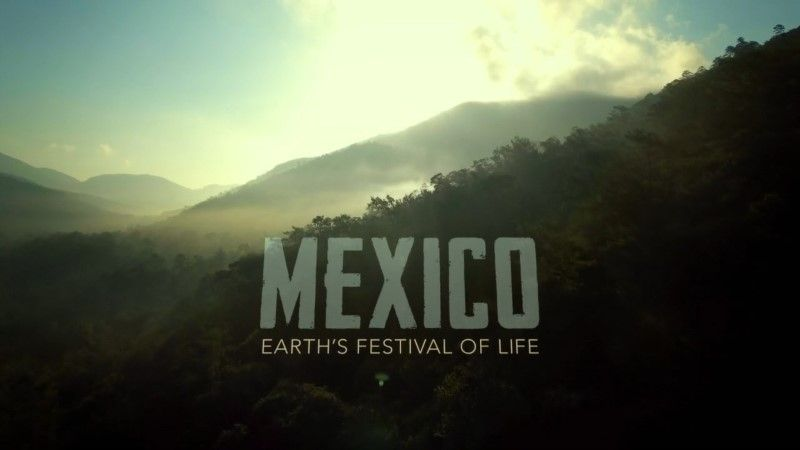 Image: Mexico-Earth-s-Festival-of-Life-Cover.jpg