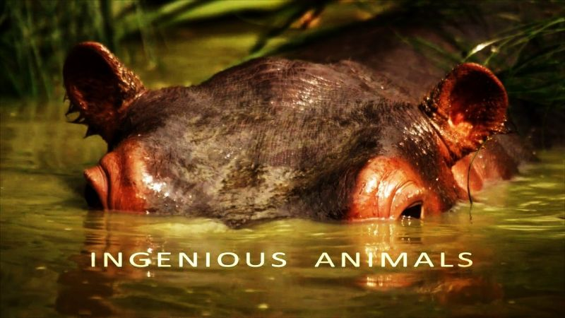 Image: Ingenious-Animals-Series-1-Cover.jpg