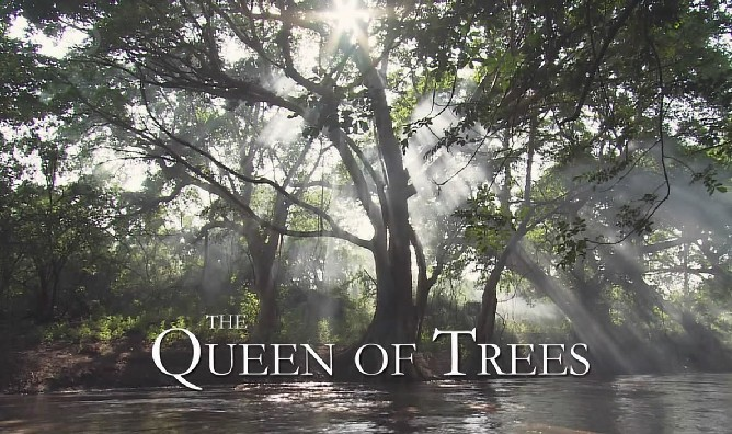 Image: Queen-of-Trees-Cover.jpg