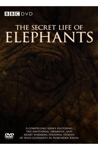 Image: The-Secret-Life-of-Elephants-Cover.jpg