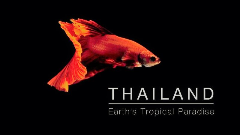 Image: Thailand-Earth-s-Tropical-Paradise-Cover.jpg