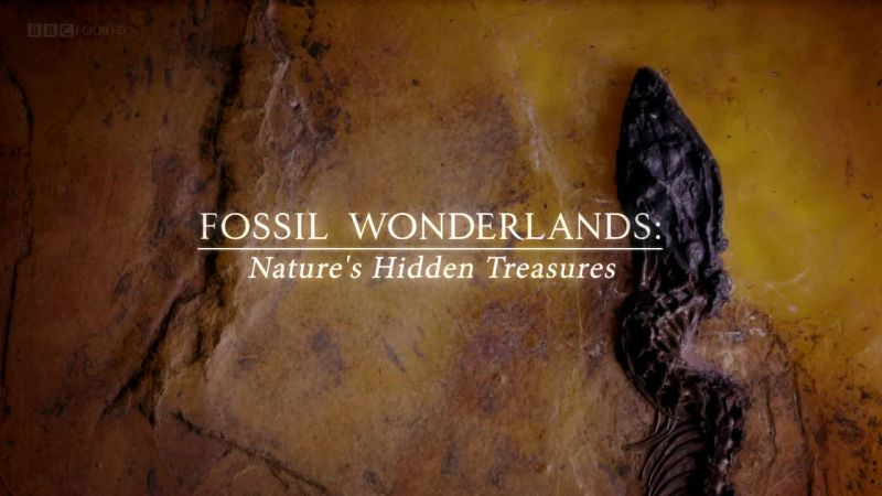 Image: Fossil-Wonderlands-Nature-s-Hidden-Treasures-Cover.jpg