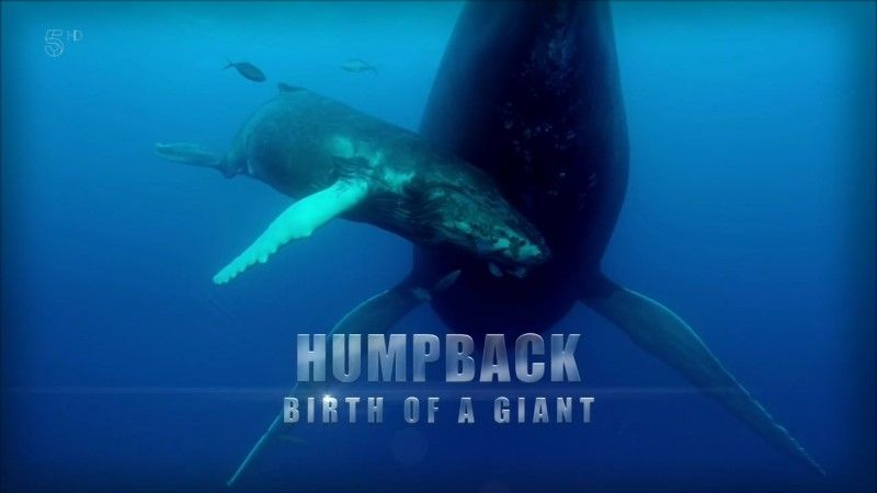 Image: Humpback-Whale-Birth-of-a-Giant-Cover.jpg
