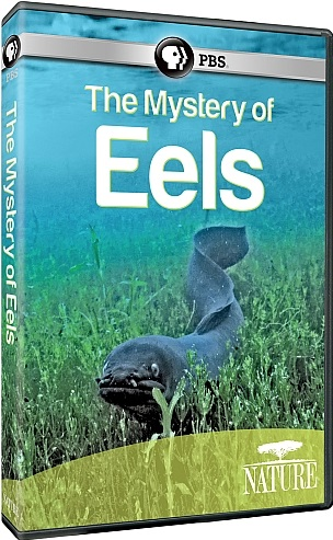 Image: The-Mystery-of-Eels-Cover.jpg