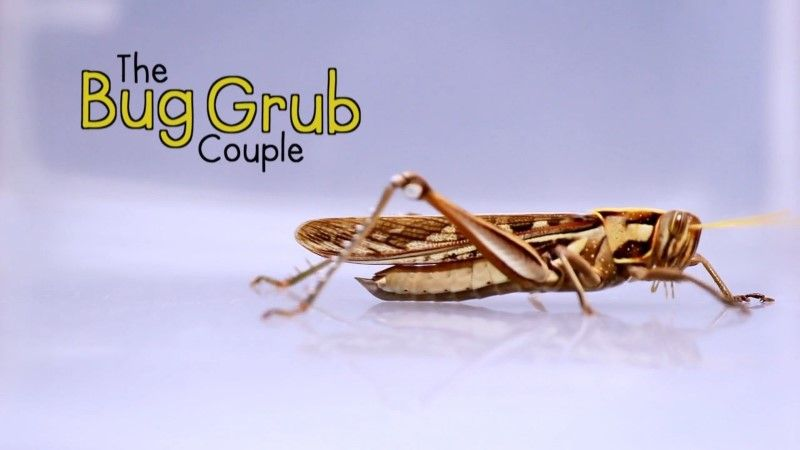 Image: The-Bug-Grub-Couple-Cover.jpg