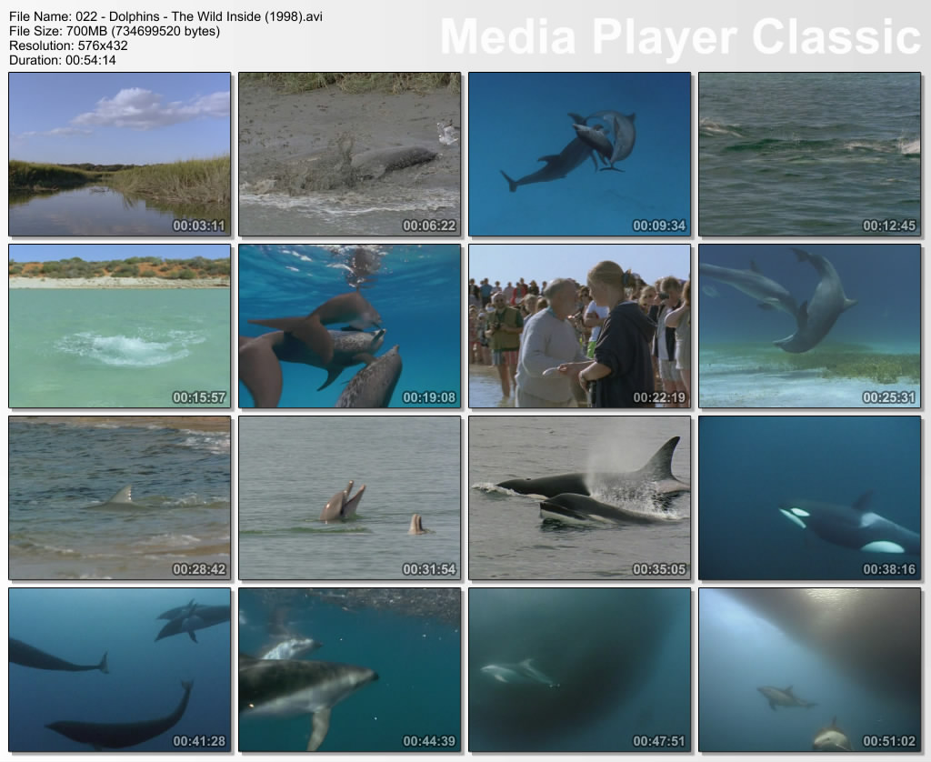 Image: Dolphins-The-Wild-Side-Screen0.jpg