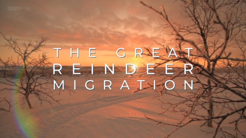 Image: All-Aboard-The-Great-Reindeer-Migration-BBC-Cover.jpg