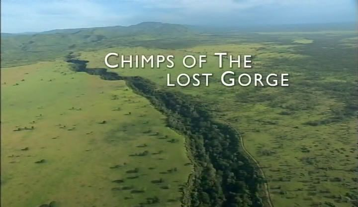 Image: Chimps-of-the-Lost-Gorge-Cover.jpg