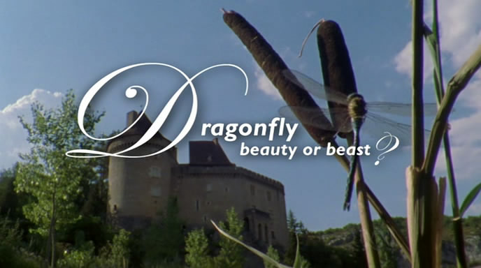 Image: Dragonfly-Beauty-or-Beast-Cover.jpg