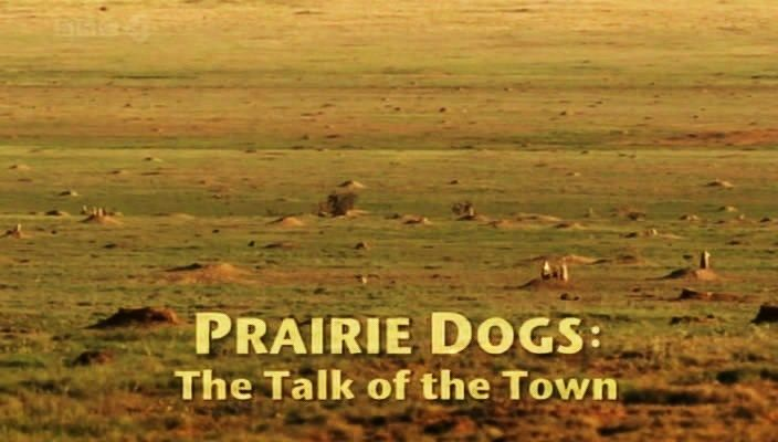 Image: Prairie-Dogs-Talk-of-the-Town-Cover.jpg