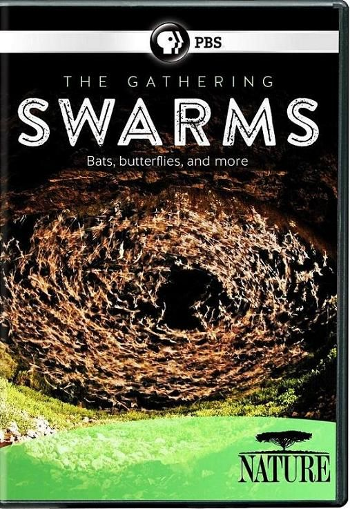 Image: The-Gathering-of-Swarms-Cover.jpg