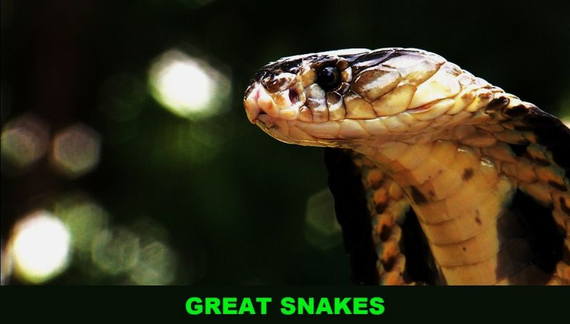 Image: Great-Snakes-Cover.jpg